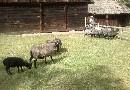 �wi�cenie zwierz�t