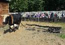 Koń i wół przy pracy