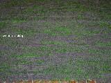 Chodnik bawełniany, ręcznie tkany szaro-jasnozielony 80x160