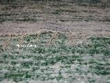Chodnik bawełniany ręcznie tkany biało-zielony 65x100 cm