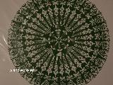Wycinanka ludowa, Gwiazda kurpiowska, kolor zielony, śred. 34 cm (wb)