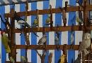 Jak rzeźbić ptaszki